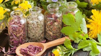 Травы от потливости – дополнительный способ борьбы с потоотделением